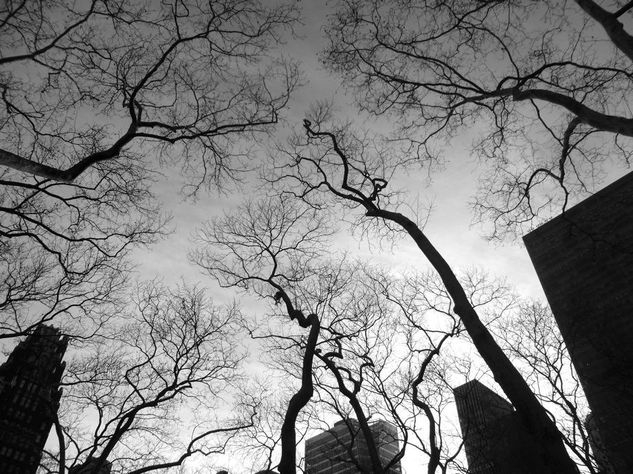 Canopée de Bryant Park