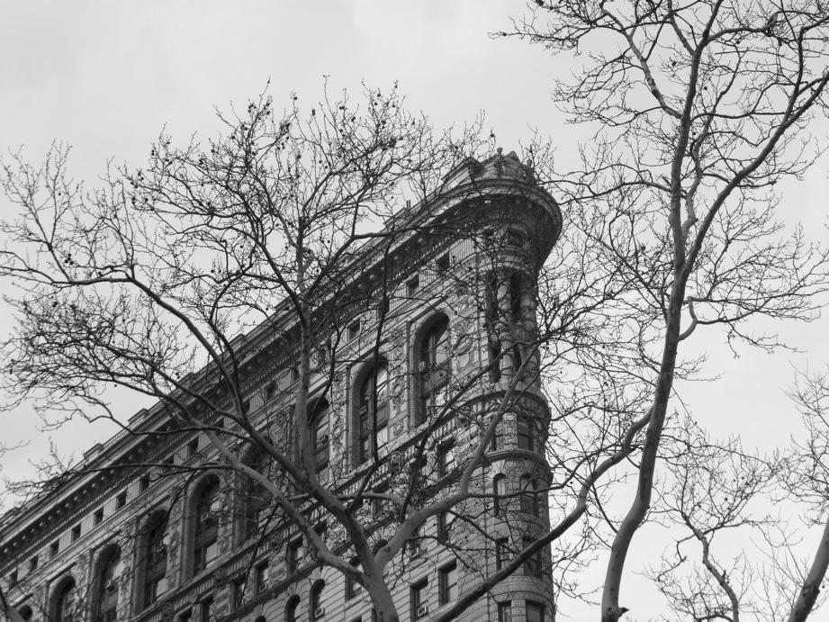 Flatiron Building et branches d'arbres
