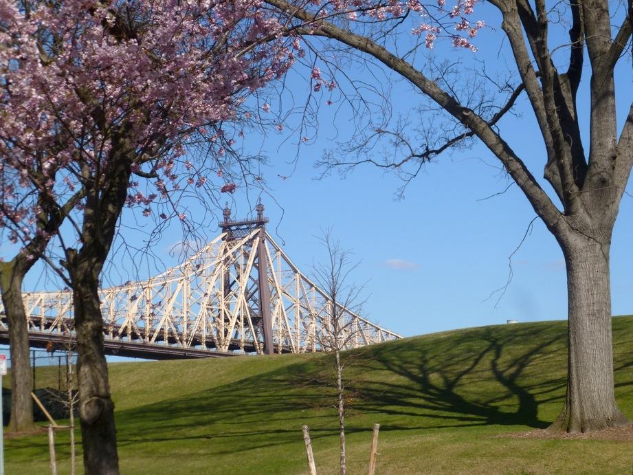 Colline verte, cerisier en fleur et morceau de pont