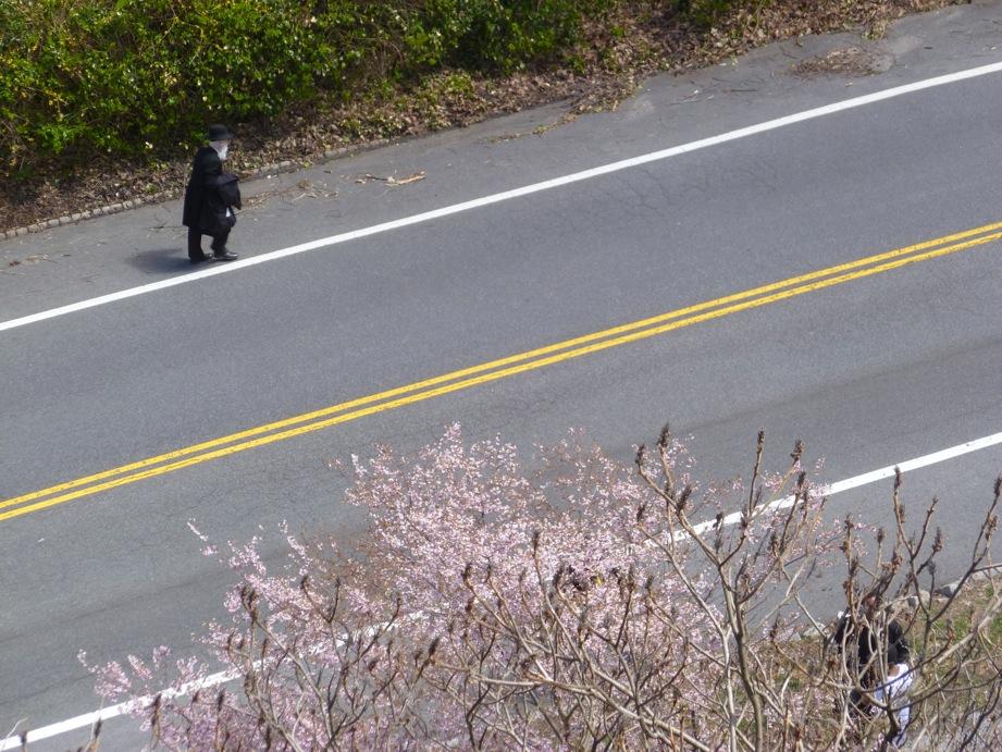 Deux bandes jaunes au milieu de la route et de part et d'autres, des arbres en fleurs et la silhouette d'un monsieur juif