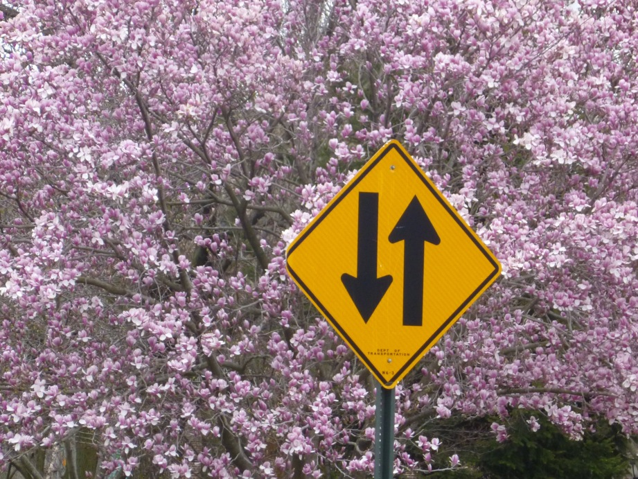 Panneau jaune sur fond d'un arbre en fleur