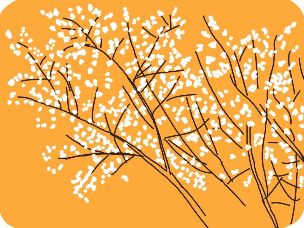 dessin de fleurs blanches sur ciel jaune-orange