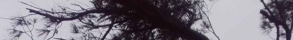 Note pour les malvoyants : les paragraphes sont entrecoupés de bandes découpées dans une seule et même photographie : un pin sur le littoral, qui nervure le ciel de ses branches.