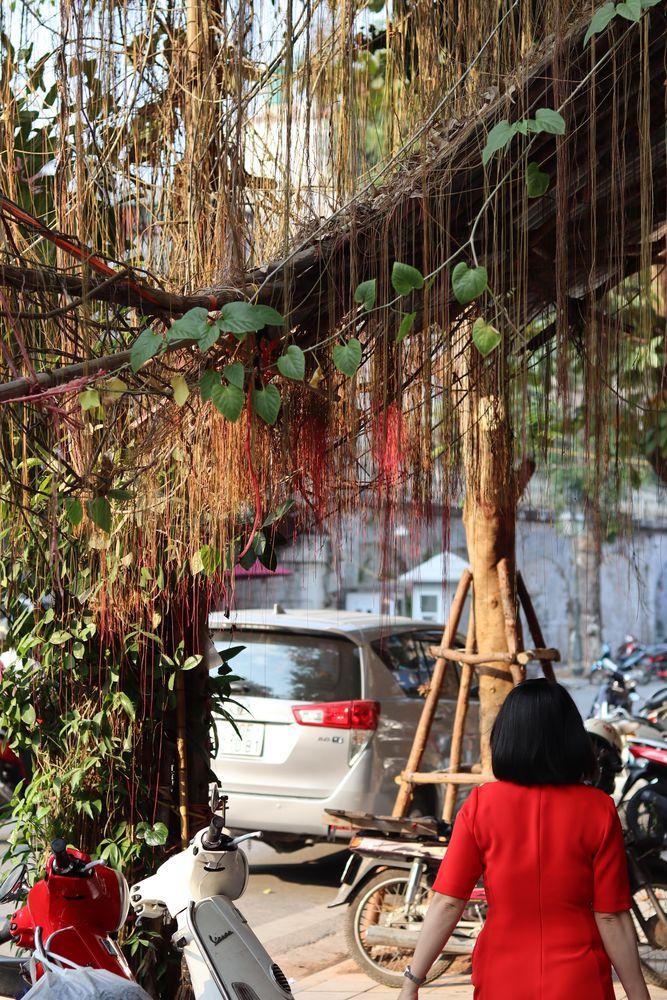 Femme de dos en robe rouge, près d'un scooter rouge et sous les branches-ficelles rougeoyantes d'un arbre
