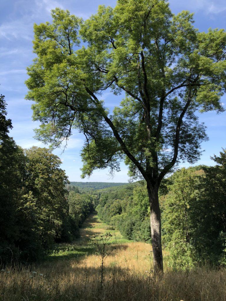 Vue sur le parc de la vallée de Chevreuse depuis le domaine du château de Breteuil